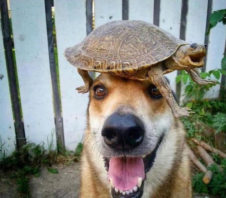 Mutluluğun resmi bu olmalı  #gülümse