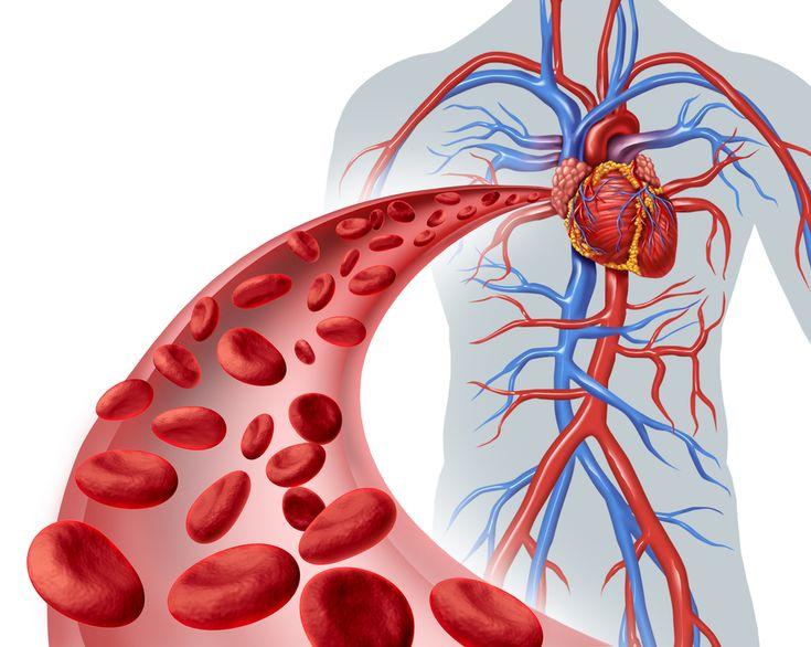 Čištění krve je velmi důležité pro celkové zdraví. 9 bylin a potravin s nejlepšími vlastnostmi pro čištění krve - www.ZdraveTipy.cz