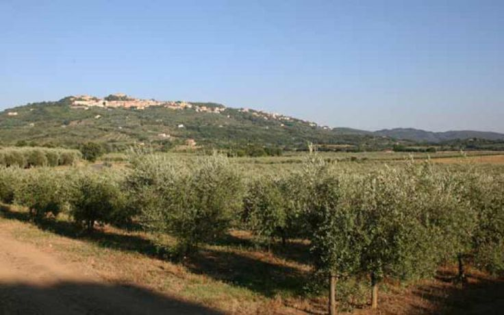 The Maremma area has always been one of the main focal points for the production of extra virgin olive oil in Italy and probably in all the world.