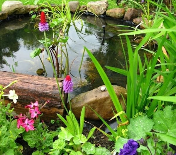 Les 25 meilleures id es de la cat gorie bassin pr form for Coque bassin jardin