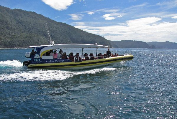 Bruny Island Cruises, a wildlife adventure experience in the south of Tasmania.