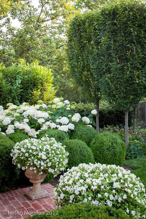 192 best garden images on pinterest backyard patio flower beds tone on tone our garden in southern living white petunias and annabelle hydrangeas mightylinksfo