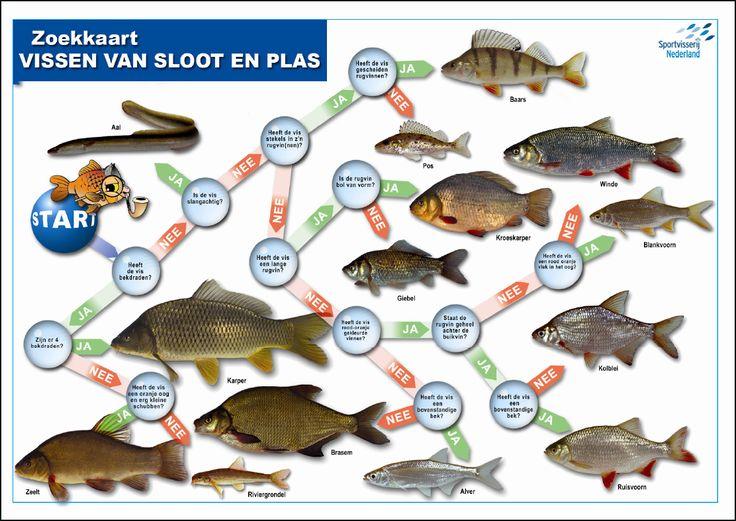 Zoekkaart Vissen van sloot en plas