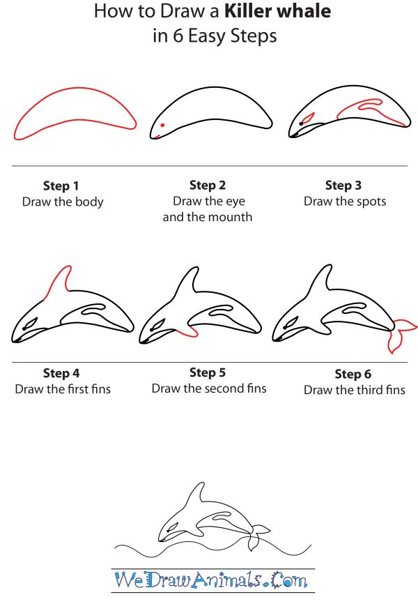 1000+ images about Regan's Orca Project on Pinterest