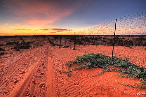 A truly sunburnt country... Dingo Proof Fence, Strzelecki Desert, South Australia.