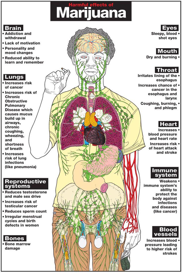 is provigil harmful effects of marijuana