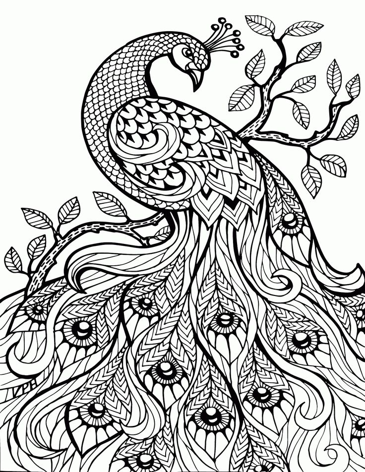 Best 25+ Coloring pages for adults ideas on Pinterest | Adult ...