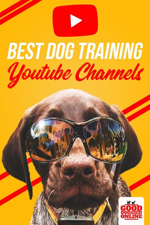 5 Best Dog Training Youtube Channels Best Dog Training Easiest