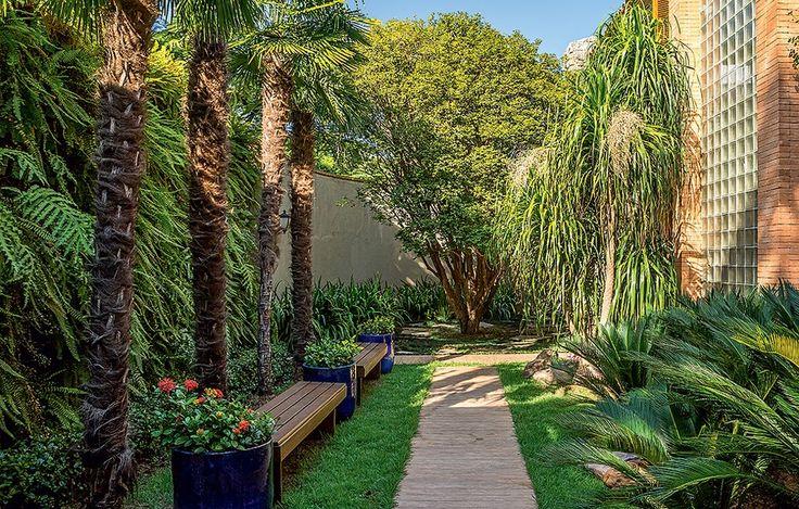 """As palmeiras moinho-de-vento ficam em frente a um jardim vertical de samambaias. """"Queria que o espaço fosse mais do que uma passagem. Coloquei dois bancos de madeira para criar uma área de contemplação"""", conta a paisagista Ana Paula Magaldi"""