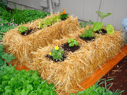Hay bale planting. The added benefit is that you can use the hay bales for fall decorations after your harvest!
