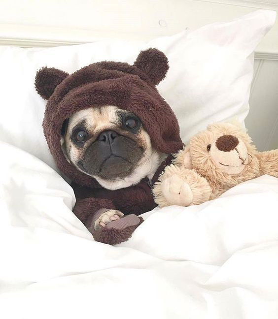 Cute Pug In Bedtime Costume - Tap the pin for the most adorable pawtastic fur baby apparel! You'll love the dog clothes and cat clothes! <3