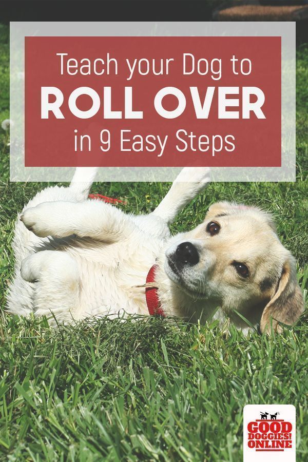 Teach Your Dog To Roll Over In A Fun And Easy Way With These