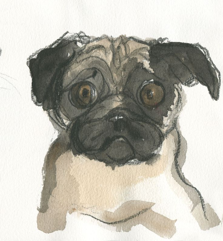 This pug is not really worried. They have rather expressive wrinkles... water-colour and pencil. #pug https://www.facebook.com/judywatsonart