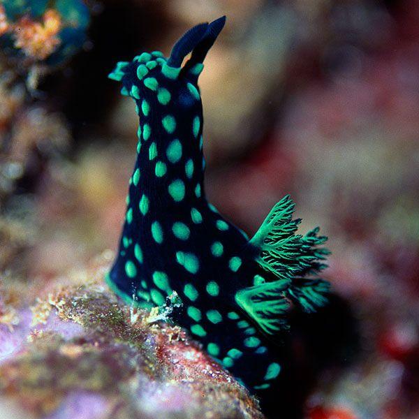 Nudibranch( - Buscar con Google