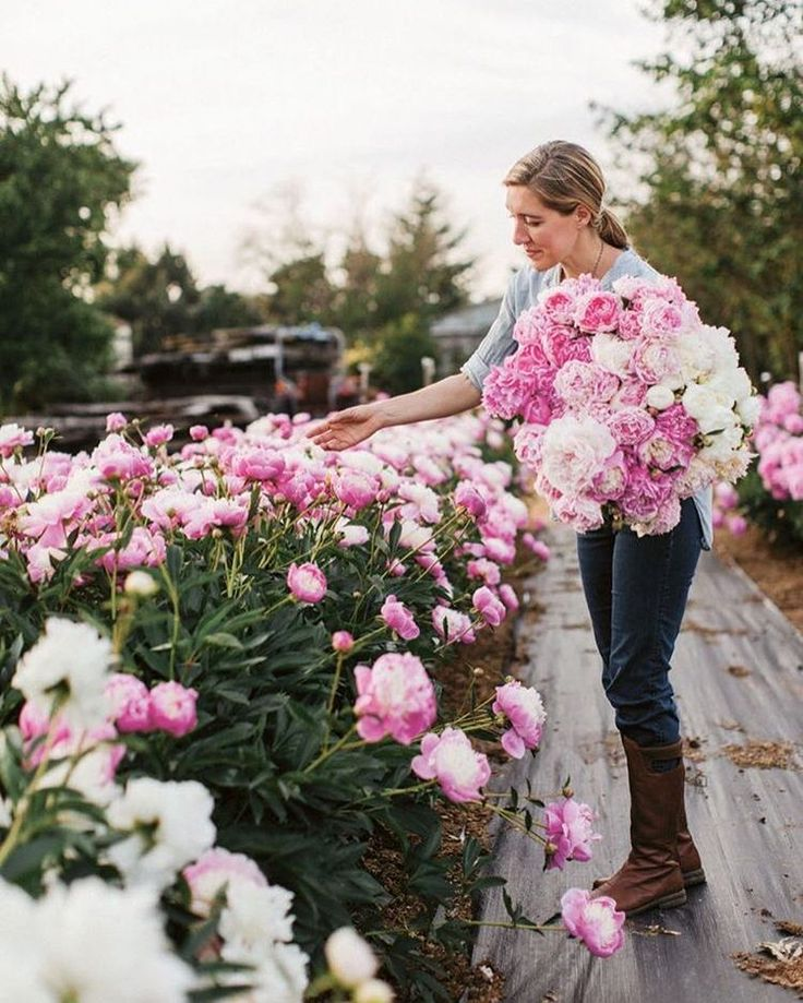 250 aprecieri, 3 comentarii - World of flowers (@shelovedflowers) pe Instagram