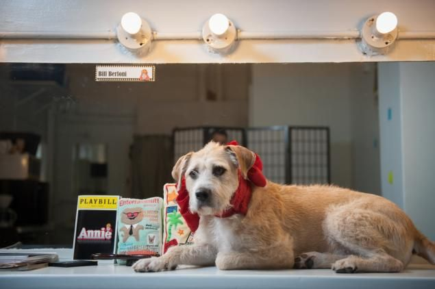 Annie Pictures From Broadway | ... as Sandy in 'Annie,' enjoys lying around her Broadway dresing room