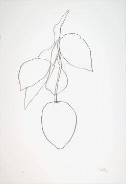 Ellsworth Kelly vegetal drawings are one of my favorite things in the world .