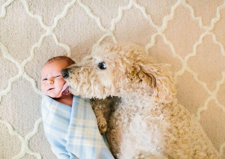 Les chiens sont de très bons compagnons pour les enfants qui leur offrent amour et protection. DGS partage avec vous 22 photographies pleines de tendresse de bébés qui posent au côté de leur grand protecteur canin ! ...