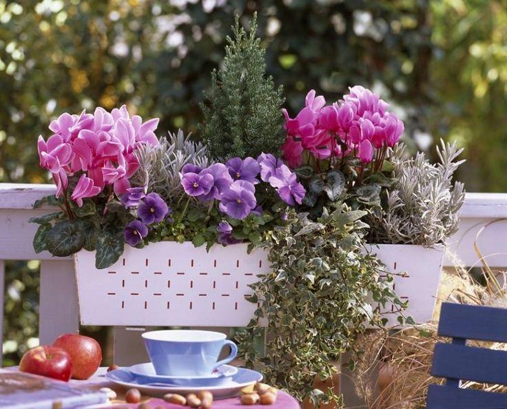 pens e et cyclamen jardinage jardini re balcon balcon. Black Bedroom Furniture Sets. Home Design Ideas