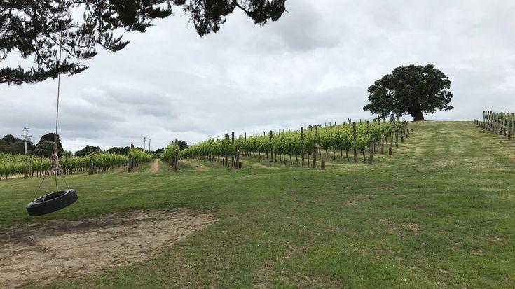 picnic winery