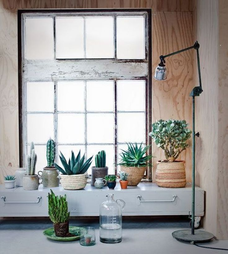 Mix and match succulents and plants over the kitchen cupboards