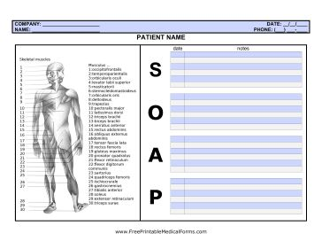 This SOAP note page is ideal for health care professionals who also need to visually mark information about the body, such as masseuses or physical therapists. Muscles can be easily circled or highlighted and referenced in the notes section. Free to download and print