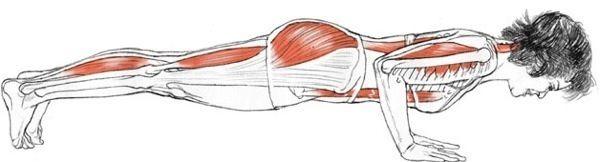 Chaturanga Dandasana (Four-Limbed Staff Pose) Tutorial - Vinyasa Yoga School