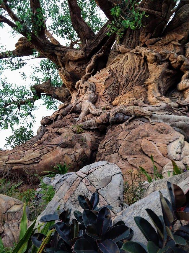Photo Google Photos Natural Landmarks Nature Google Photos