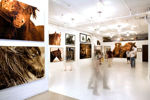 Wild Horses of Sable Island - Roberto Dutesco Showroom in SoHo