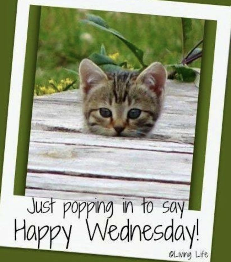 53 best Wednesday Memes images on Pinterest | Wednesday ...