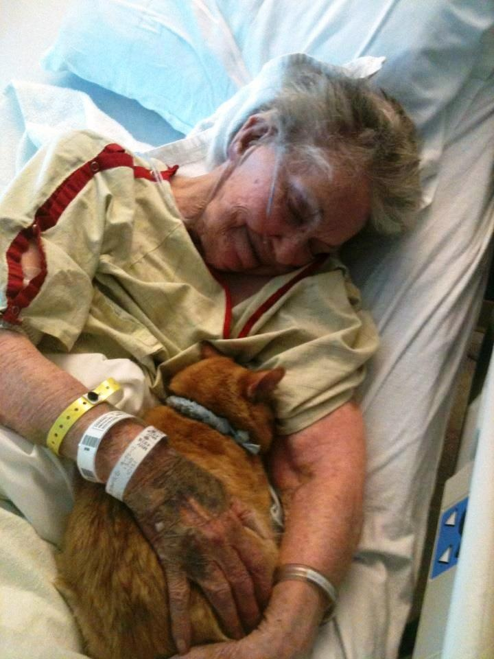 Doing the rounds on French Facebook: a hospital that allowed a woman's beloved pet accompany her for the last few days and hours of her life...: Life, Friends, Heart, Pet, Ladies Cat, Hospitals Allowance, Kitty, Human, Animal