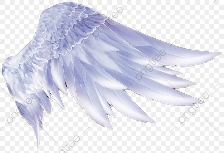 Angel Wings Angel Clipart Wings Clipart Png Transparent Clipart Image And Psd File For Free Download Alas De Angel Disenos De Unas Alas