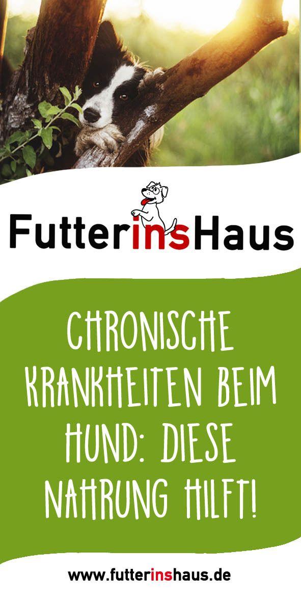 Sprechen Sie Vor Der Futterung Mit Ihrem Tierarzt Bei Athritis Hanfol Bei Blasenschwache Leinol Bei D Hunde Futter Getreidefreies Hundefutter Hundefutter