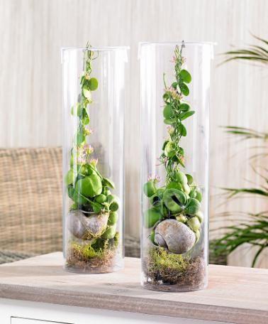 Rotgömma i plastcylinder | Plantor | Bakker Holland