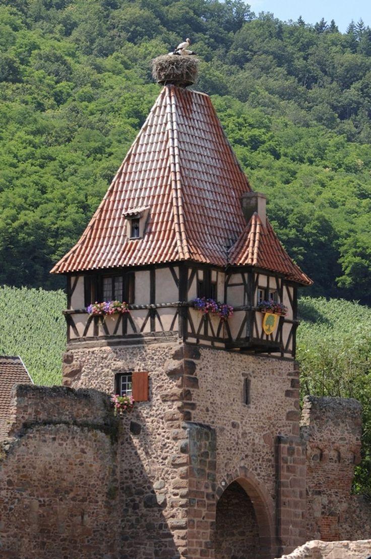 Chatenois et son nid de cigognes - #Alsace