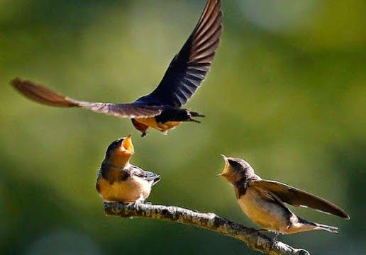 keindahan burung