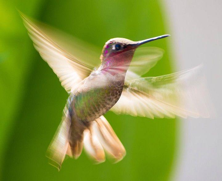 Hummingbird Whisperer Captures Close-Up Photos of Birds Visiting Her Backyard