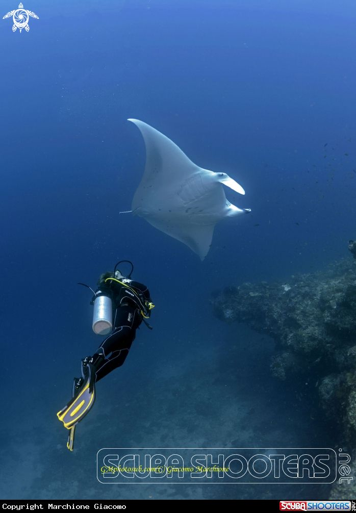 Diving with Manta in Dharanvandhoo Island -  Maldives