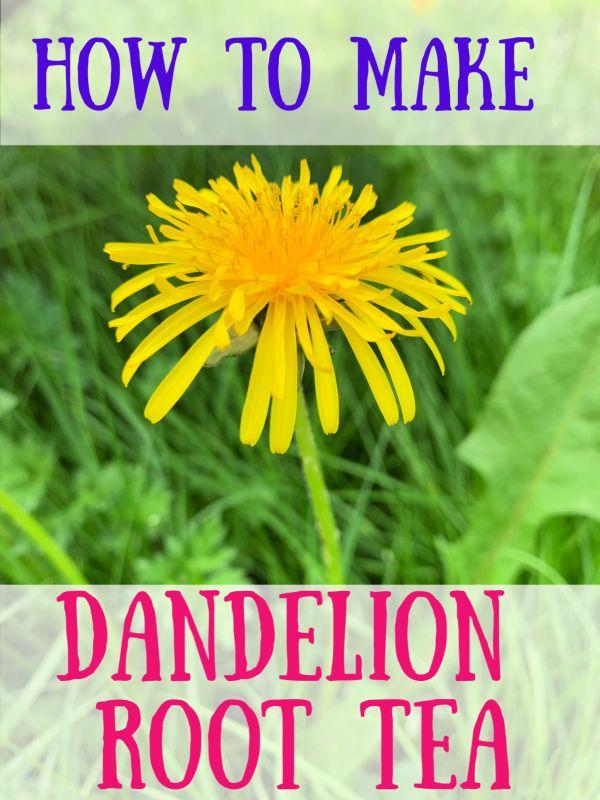 Dandelion Root Tea Harvest Prepare And Cook Dandelion Tea Recipe Dandelion Root Tea Dandelion Tea Dandelion Root