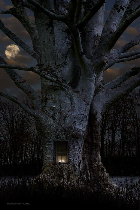 Someone's at home.  Now that is a treehouse!