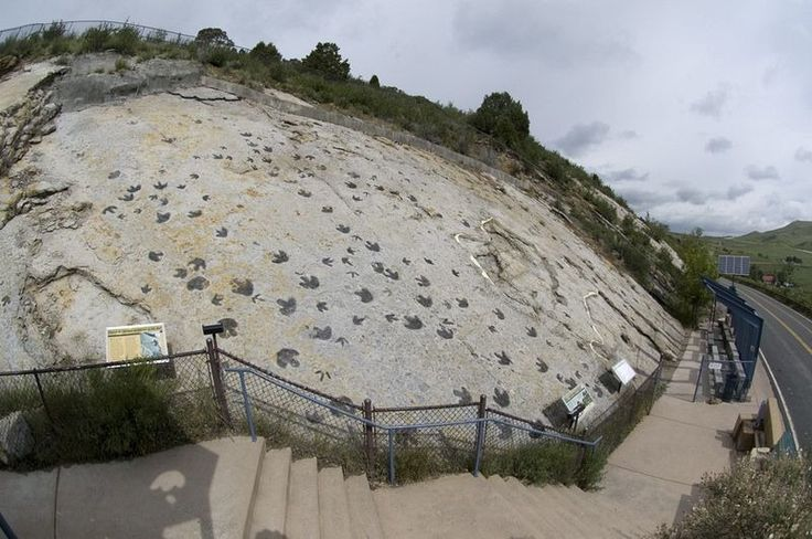 The Dinosaur Ridge in Morrison, Colorado, one of the world's most famous dinosaur sites, was discovered in 1877 by Arthur Lakes, and Apatosaurus, Diplodocus, Stegosaurus, and Allosaurus were first identified. A stony incline, exposed in 1937, reveals hundreds of dinosaur footprints fossilized in the rock by Iguanodon-like herbivores and ostrich-sized carnivores about 100 million years ago, when the dinosaurs were migrating north and south along the shore of the ancient inland sea.