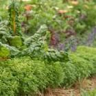 """Protect Your Backyard Garden from Climate Chaos   Organic Gardening Magazine   """"Check out new hardiness zone maps; Calculate perennial plantings with a changing climate in mind; compost, compost, compost; keep celebrating the home vegetable garden!"""""""
