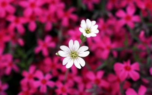 Beautiful-flower-images