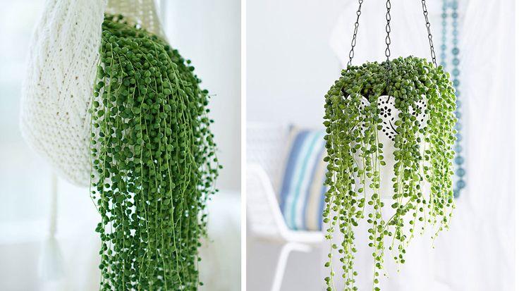 les 25 meilleures id es de la cat gorie arrangements de plantes grasses sur pinterest plantes. Black Bedroom Furniture Sets. Home Design Ideas