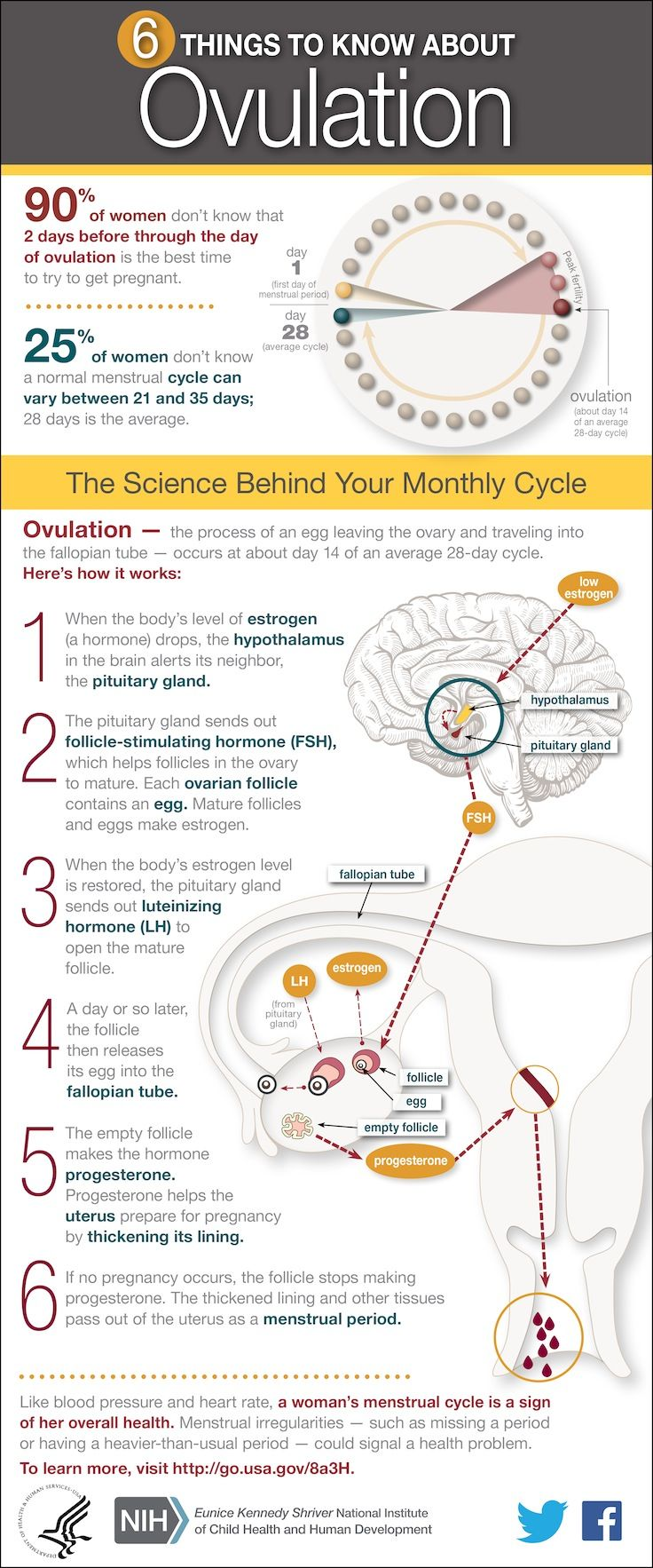 Learn the 6 things to know about ovulation with this infographic. Please come visit us at www.healthystartncf.org. Healthy Start offers free services to prenatal moms and babies age birth to three.