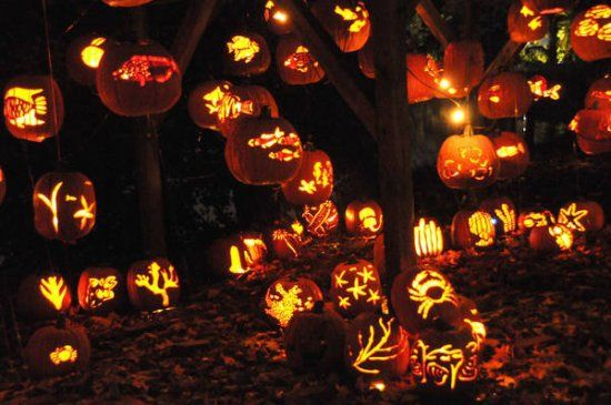 Best 25+ How did halloween originate ideas on Pinterest | Fairy ...