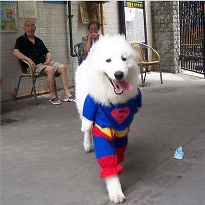 I love that these two people cannot contain their laughter. For Sale, Small Pet Dog Clothes Clothing Puppy Apparel Costumes Superman Suit Size Size M | eBay
