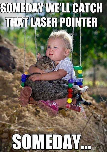 The 20 Funniest Pictures of Babies With Cats!