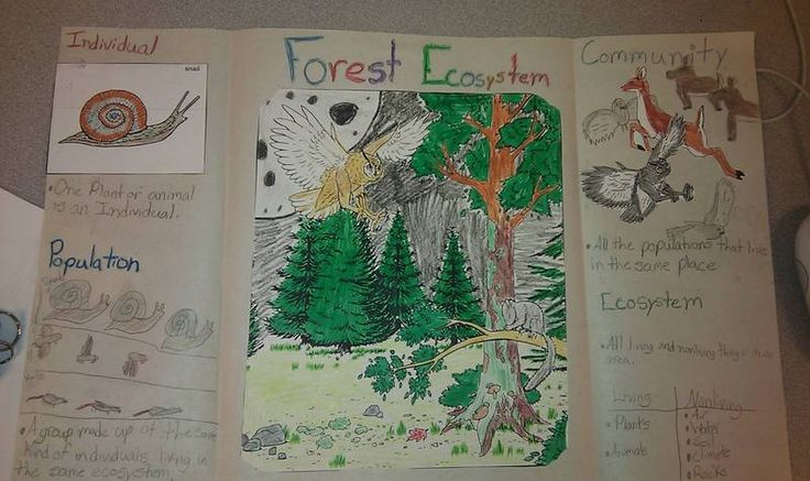 essay topics forest
