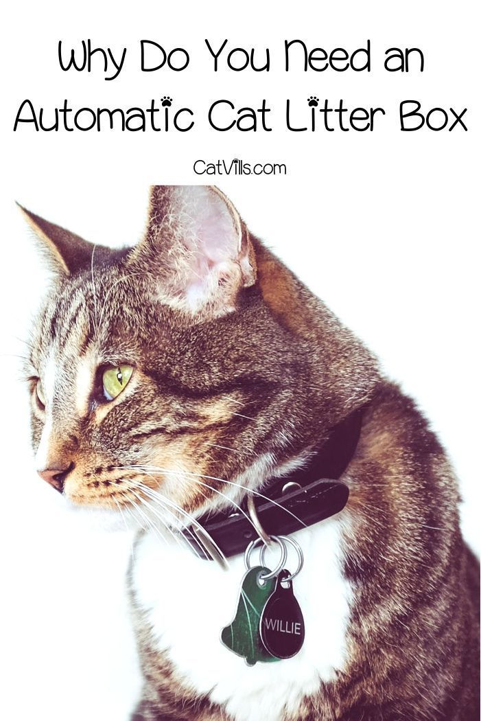 Top 5 Best Automatic Cat Litter Boxes With In Depth Reviews Catvills Automatic Cat Cat Litter Automatic Cat Litter